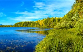 Preview wallpaper Siberia, river, trees, green, forest, blue sky
