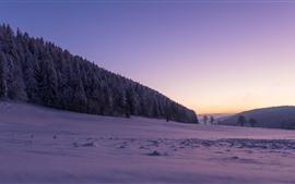 Suíça, neve, inverno, árvores, floresta, roxo