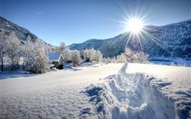 Vorschau des Hintergrundbilder Dicker Schnee, Bäume, Sonnenstrahlen, Blendung, Winter