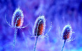 Aperçu fond d'écran Trois fleurs, glace, givre