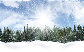 Vorschau des Hintergrundbilder Bäume, Schnee, Sonnenstrahlen, Schneeflocken, Winter