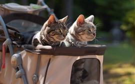 壁紙のプレビュー 2つの猫、ベビーカー