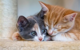 Две котенки спят, кот