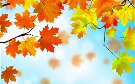 預覽桌布 傳染媒介設計,黃色和紅色槭樹葉子,秋天