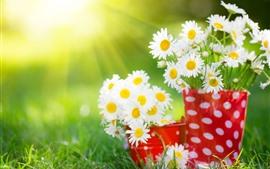 Flores de camomila branca, copo vermelho, luz do sol