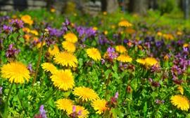 Flores amarillas de dientes de león y flores rosas