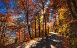 Осень, деревья, дорога, солнечные лучи, желтые листья