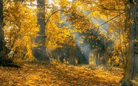 Aperçu fond d'écran Automne, arbres, feuilles jaunes, rayons de soleil