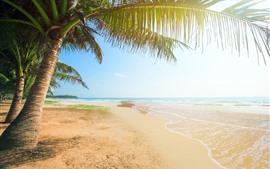 Пляж, пальмы, море, тропические