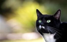 Aperçu fond d'écran Chat noir, visage, yeux verts, regard, fond brumeux