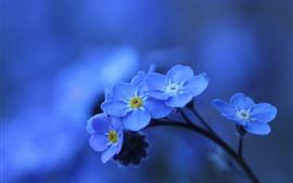 Синие цветы макросъемка, забыть я - не