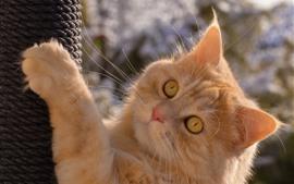 Preview wallpaper Cat climb, face, look