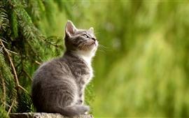 Preview wallpaper Cute little kitten, cat, look, green background