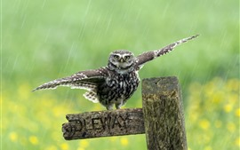Preview wallpaper Cute little owl, wings, wood, rainy