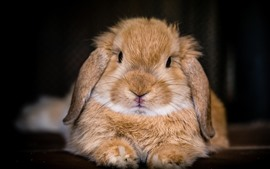 Preview wallpaper Cute rabbit macro photography, face, nose, eyes, ears