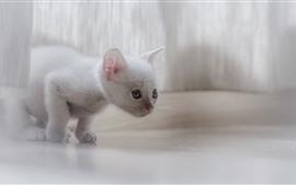 Preview wallpaper Cute white kitten, cat, look, hazy
