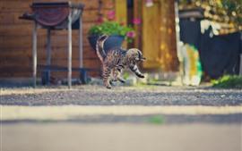 壁紙のプレビュー 子猫の遊んで、ジャンプ