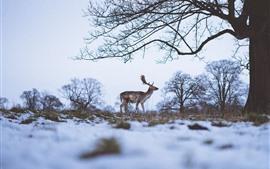 Одинокий олень, зима, снег, деревья
