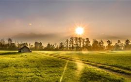 Morgen, Feld, Bäume, Haus, Grün, Sonnenschein