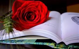 Una rosa roja, pétalos, libro.