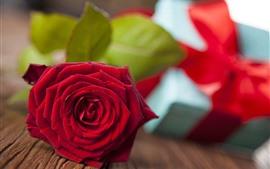 Una rosa roja, pétalos, regalo, romántico.