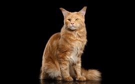 Preview wallpaper Orange cat, standing, look, black background