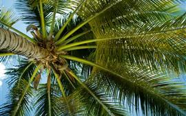 棕櫚樹,葉子,莖