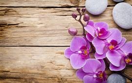 Phalaenopsis rosa, flores, pétalos, piedras, tabla de madera.