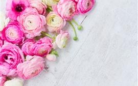 Flores de ranúnculo rosa, placa de madeira