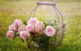 Rosas Rosadas, Flores, Cesta, Hierba