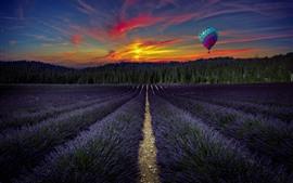 Фиолетовая лаванда цветы поля, воздушный шар, деревья, закат