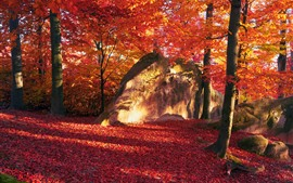 Preview wallpaper Red leaves, trees, stone, autumn