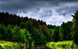 川、森、木、雲