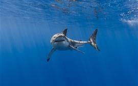 Aperçu fond d'écran Requin, bouche, dents, sous-marine, mer