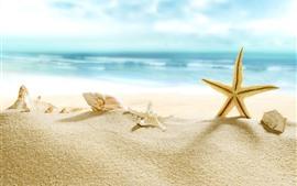 Морская звезда, пляж, раковина, море, тропический