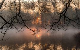 Aperçu fond d'écran Brindilles, rivière, brouillard