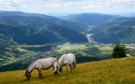 Preview wallpaper Two horses, slope, mountains, valley, village