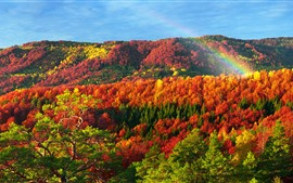 Aperçu fond d'écran Ukraine, Carpates, Bel automne, rouge, jaune, vert