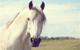 Aperçu fond d'écran Cheval blanc, visage, bouche, yeux, crinière