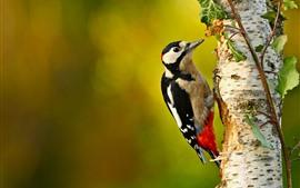 Woodpecker, птица, дерево, листья