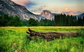 Yosemite National Park, árvores, montanhas, madeira, EUA