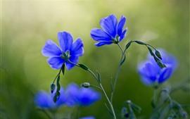 미리보기 배경 화면 푸른 꽃 매크로 사진, 꽃잎, 줄기