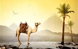 Camelo, Egito, Palmeiras, Pássaros