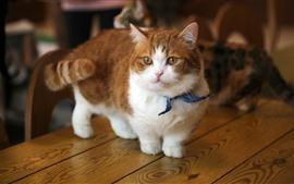 Aperçu fond d'écran Kitten mignon, regarder, chat, table