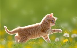 Aperçu fond d'écran Kitten jolie play pissenlit, herbe