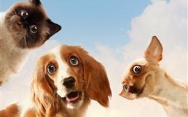 壁紙のプレビュー 犬と猫、見て、顔、空、雲
