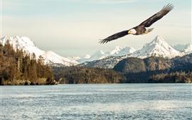 Vorschau des Hintergrundbilder Adler, Flügel, Flug, See, Bäume, Berge, Schnee