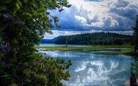 Aperçu fond d'écran East Lake, arbres, nature, États-Unis