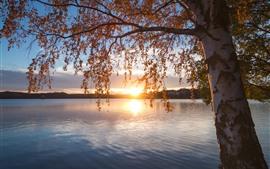 Aperçu fond d'écran Finlande, lac Saimaa, arbre, automne, coucher de soleil