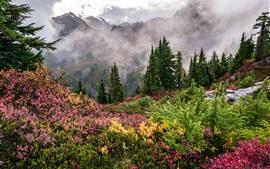 Vorschau des Hintergrundbilder Wald, Gras, Bäume, Berge, Wolken, Nebel, Natur
